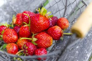 Selbstversorger Erdbeeren