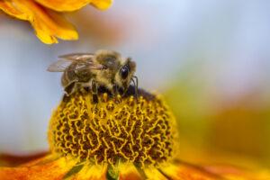 Insektenfreundlich und pflegeleicht